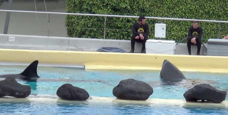 orcas-tenerife10