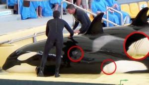 orcas-tenerife3 - copia