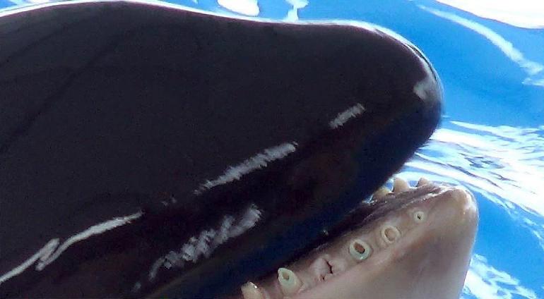 orcas-tenerife7