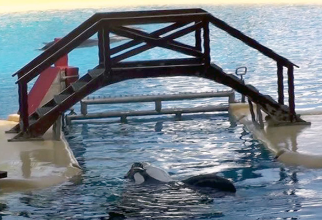 orcas-tenerife8