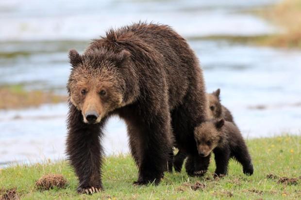 oso-peligro-bosque-reportaje-abejas