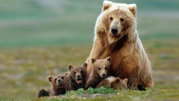 oso-peligro-bosque-reportaje-abejas2