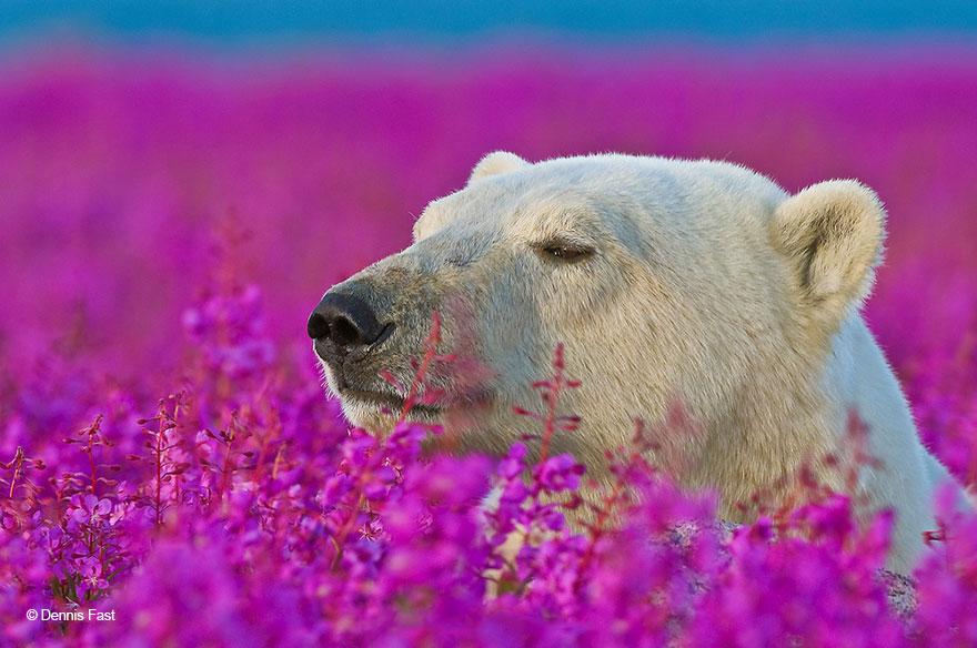 oso-polar10