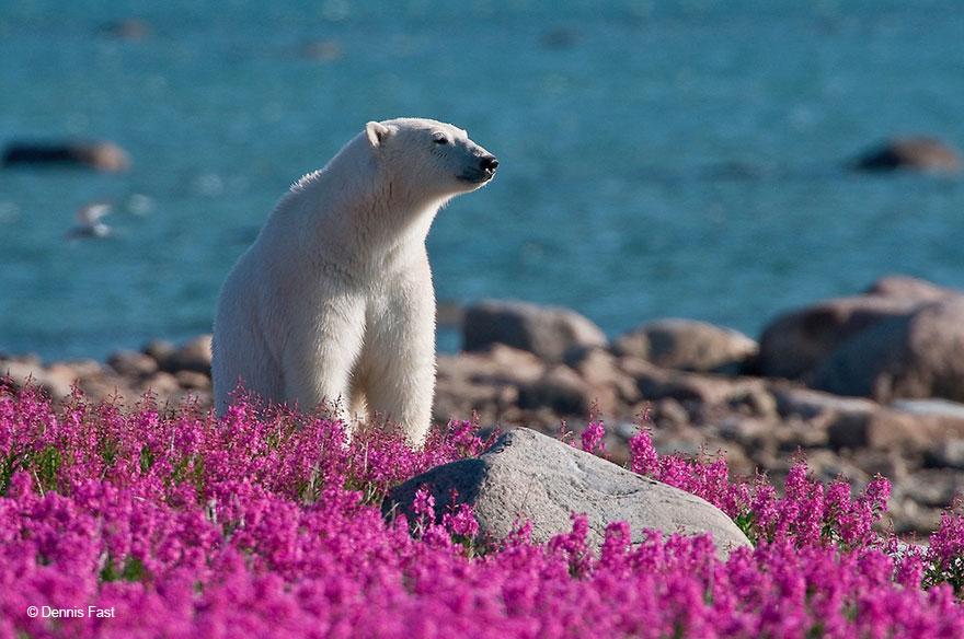 oso-polar11