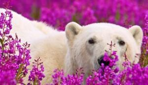 oso-polar3 - copia