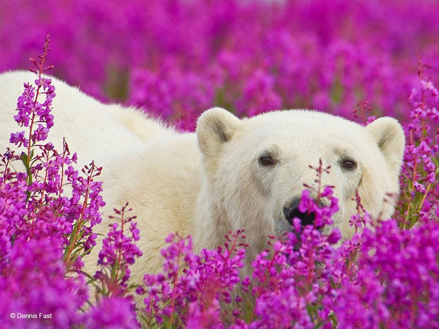 oso-polar3