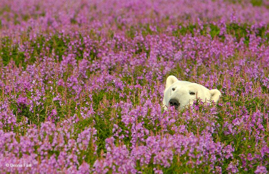 oso-polar4