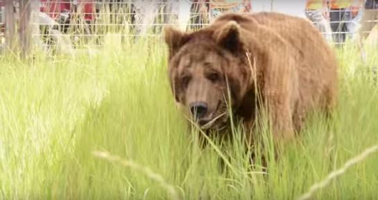 osos-liberados-eeuu11