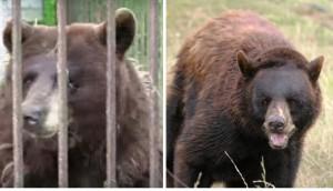 osos-libres-20-anos-despues
