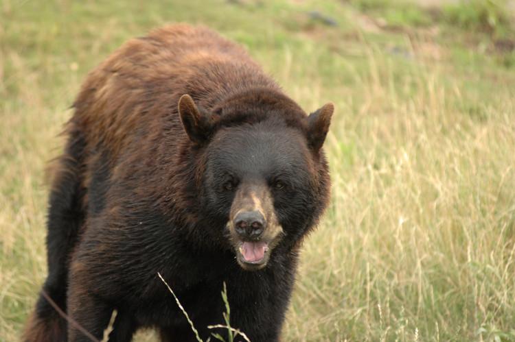 osos-libres-eeuu