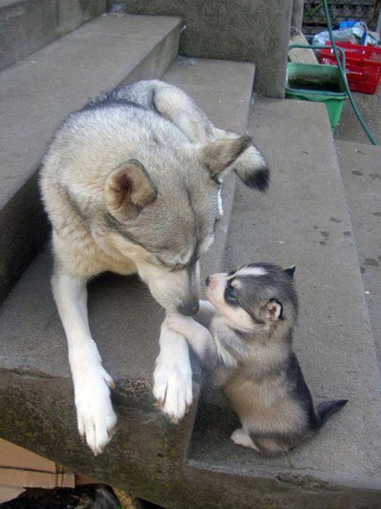 padres y cachorros 1
