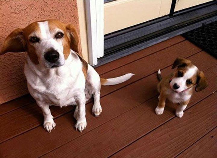 padres y cachorros 13