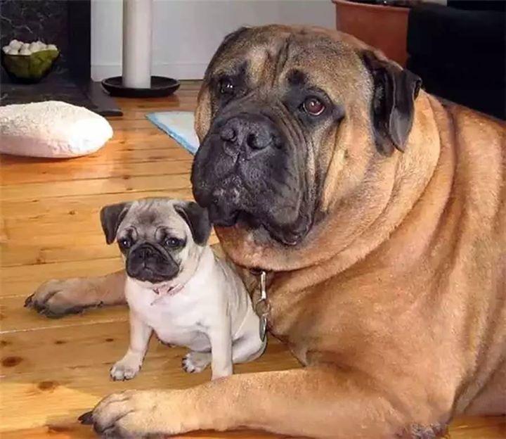 padres y cachorros 14