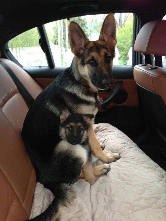 padres y cachorros 15