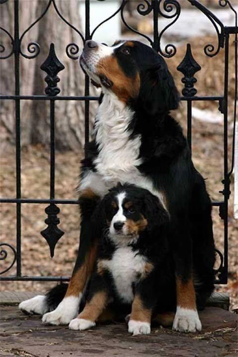 padres y cachorros 2