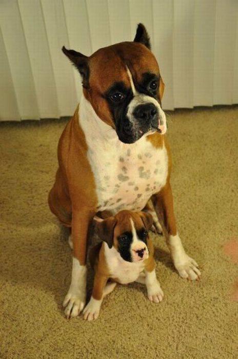 padres y cachorros 3
