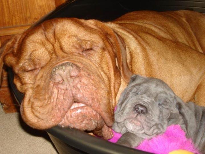 padres y cachorros 5