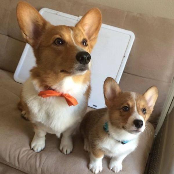padres y cachorros 6