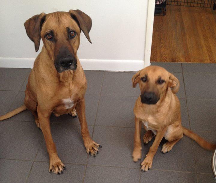 padres y cachorros 7