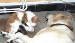 perro-asiste-gato-parto