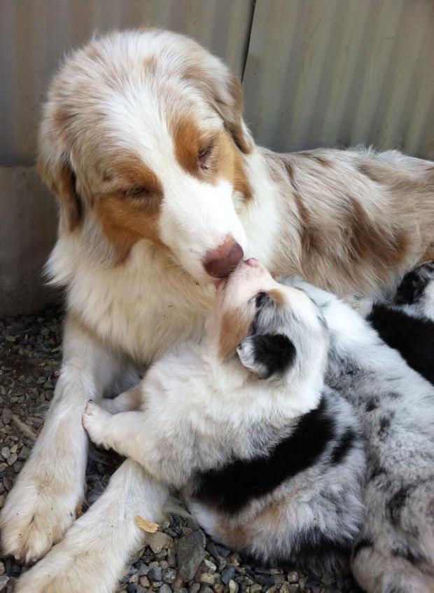 perro-cachorro15