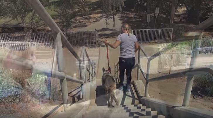 perro-canal-rio-rescate6