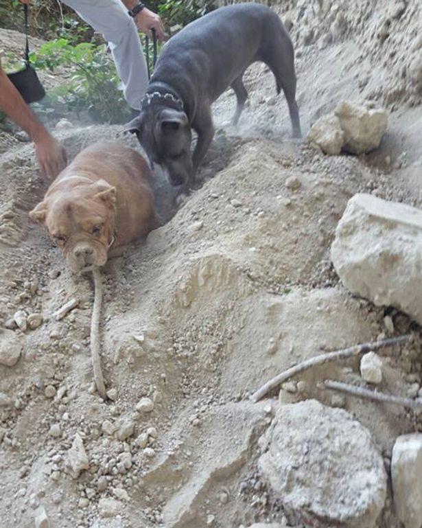 perro-enterrado.vivo