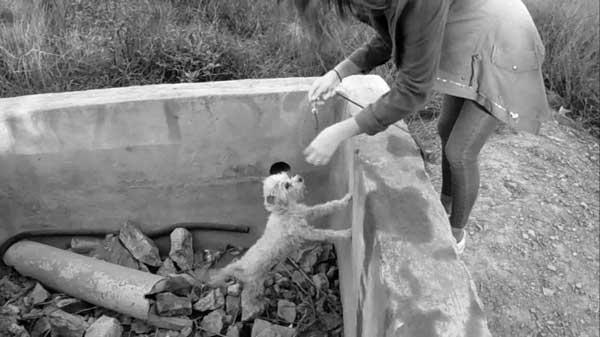 perro-gato-abandonado