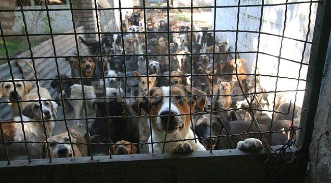 perro-refugio