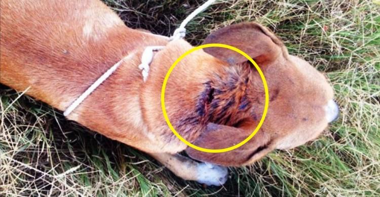 perro-rescatado-herido9