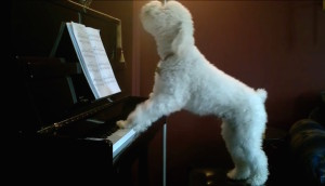 perro-toca-piano