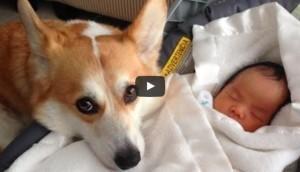 perros-cuidan-bebe-play