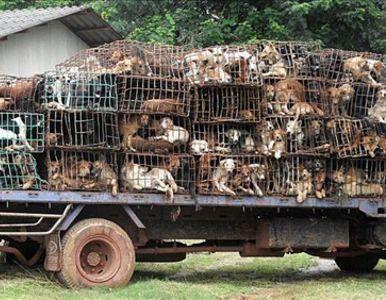 perros-en-camion