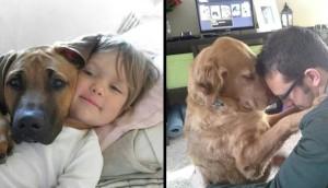 perros familia id Cropped