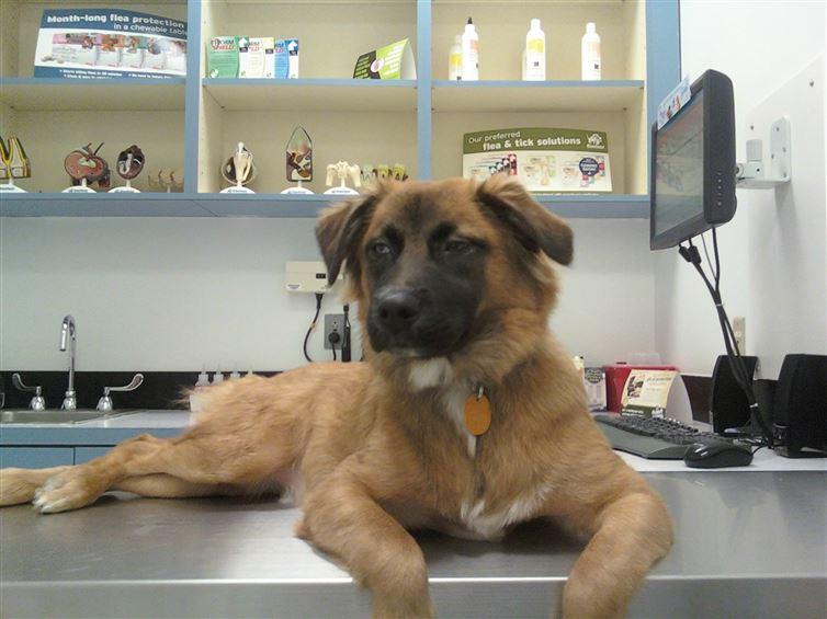perros van al veterinario 13