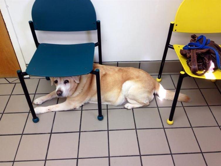 perros van al veterinario 14