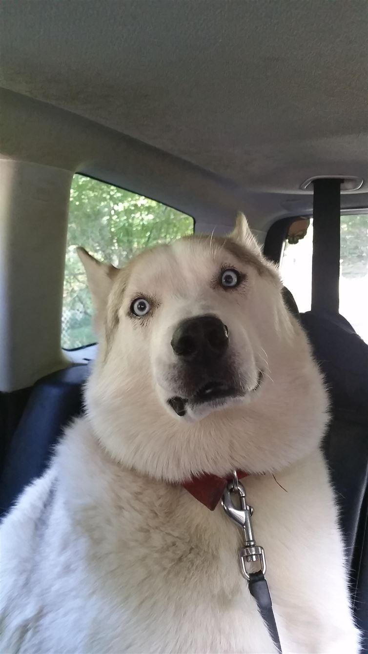 perros van al veterinario 5