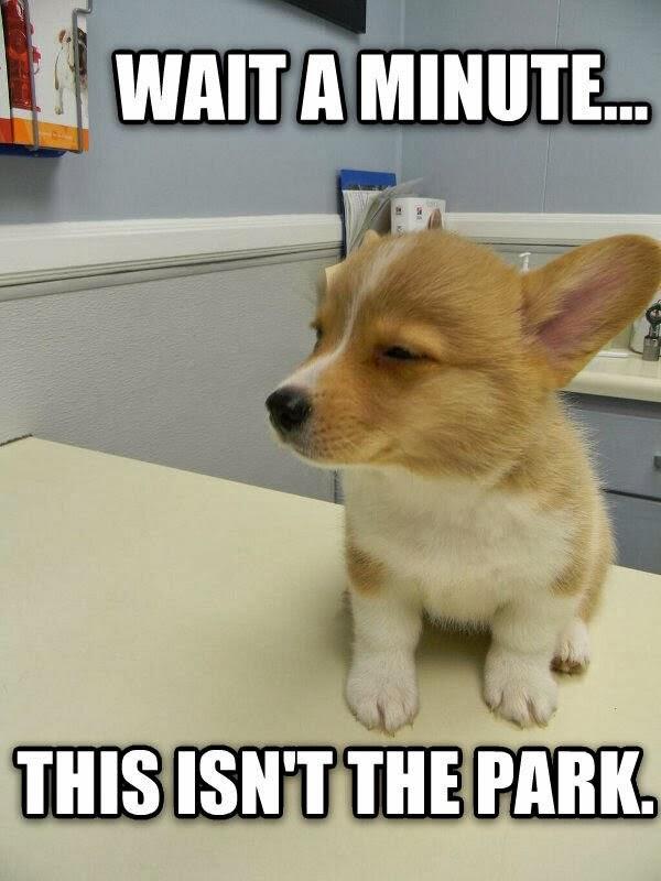 perros van al veterinario 8