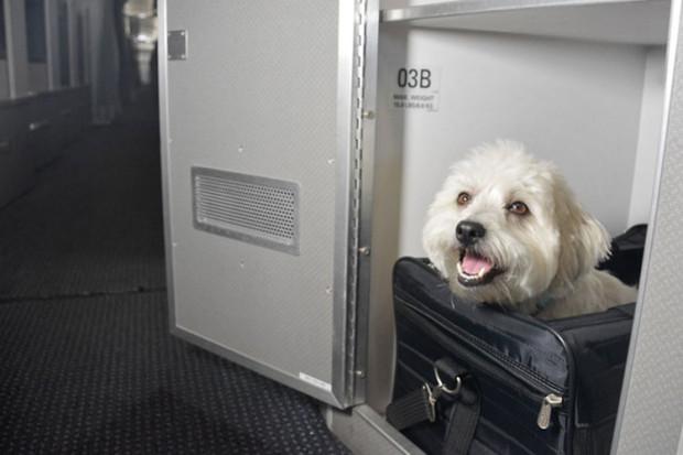 perros-viaje-aa