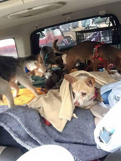 perros-viaje-sin-hogar