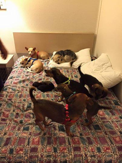 pijamada-perros1