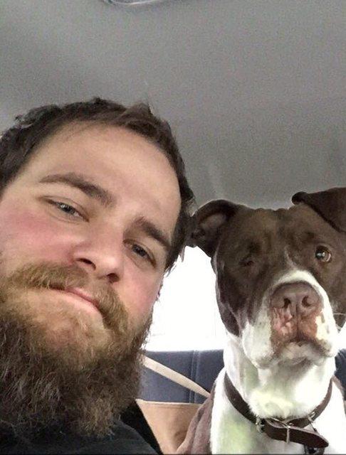 pitbull-adoptado13