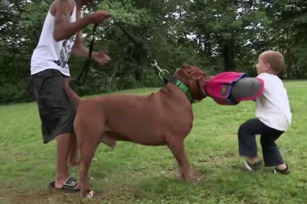pitbull-grande-8-cachorros-13