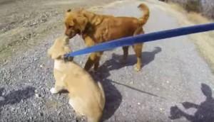 reencuentro-madre-hijo-perros