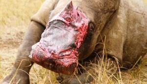rhino-intentaron-mutilarlo - copia