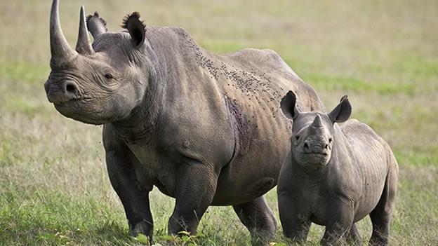 rinoceronte-extinto4
