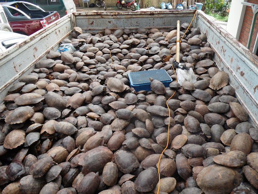 tortugas rescatadas 2
