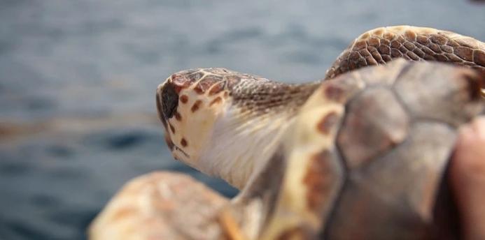 Tortugas1