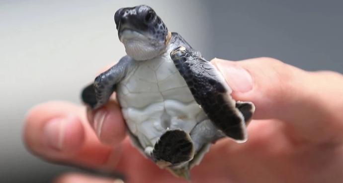 Tortugas3