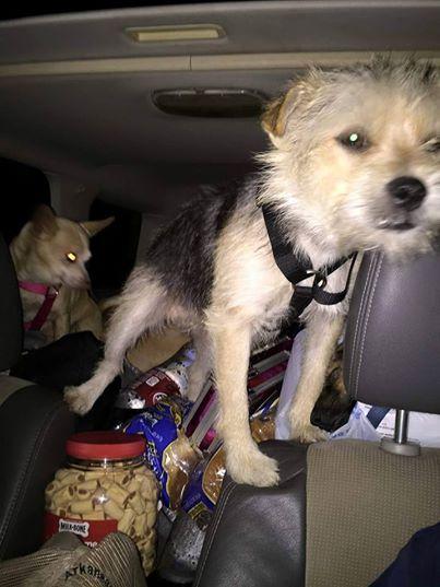 viaje-perros